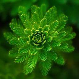 The plant of Oriental Medicine